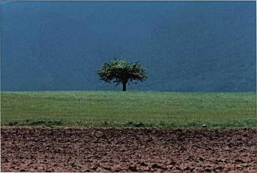 ArtChart | Artwork by Abbas Kiarostami