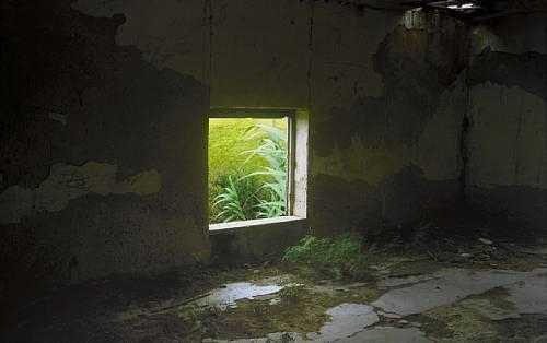 ArtChart | Window face to life by Abbas Kiarostami