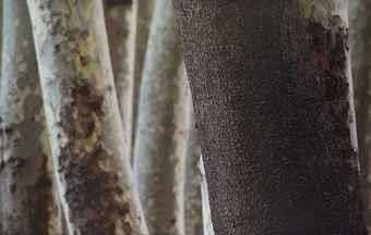 آرتچارت | Untitled (from the Trees and Crows series) از عباس کیارستمی